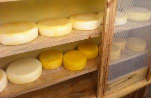 Metodologia de queijos artesanais